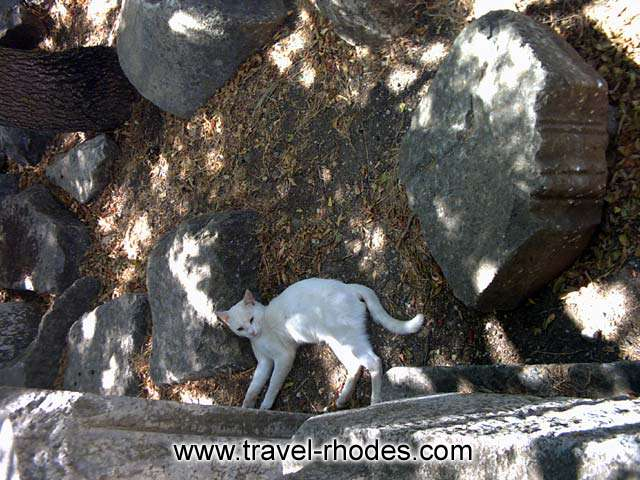 MONTE SMITH - A cat lying between the parts of an ancient temple in Rhodes