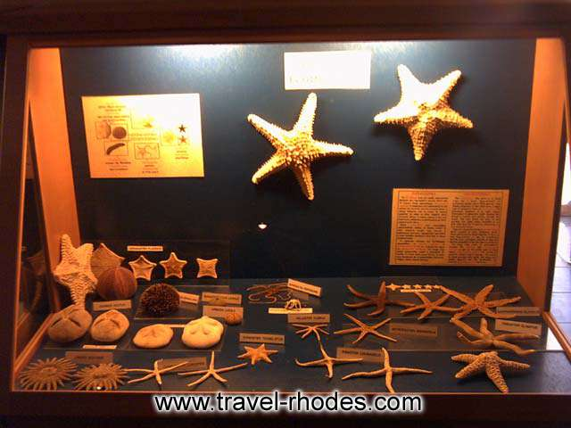 DETAIL - A collection of sea stars in Rhodes Aquarium